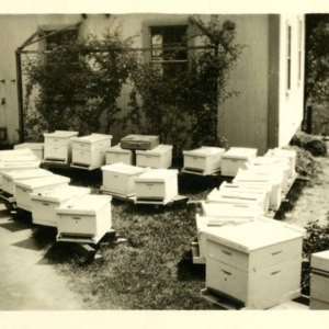 Bee distribution day